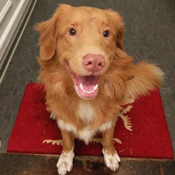 Julian's hund hedder Albert og han er en Nova Scotia Duck Tolling Retriver. Han spreder meget glæde på kontoret i København