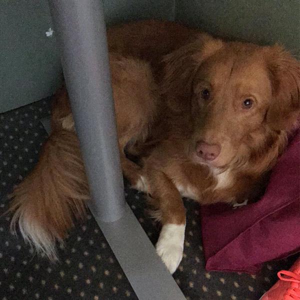 Julians hund Albert hygger sig under bordet når han er med på arbejde.